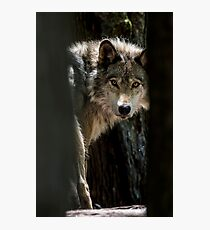 Wolf In Forest Photographic Print