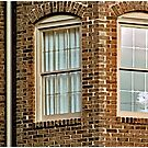 How Much Is That Doggie In The Window? by Mark Ross
