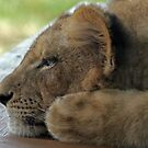 Relaxing Lion Cub by Judson Joyce