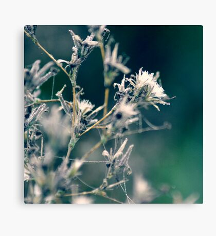 Cotton Forest Canvas Print