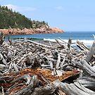 Driftwood by John Thurgood