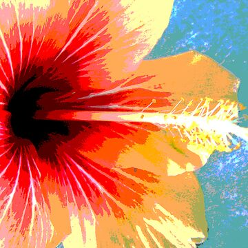 Tropical Hibiscus by Maurz