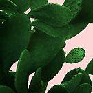 «Cactus en rosa» de by-jwp