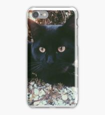 Black Cat in Fall iPhone Case/Skin