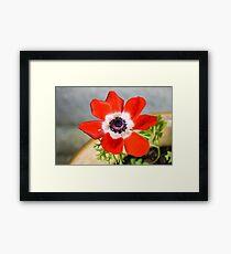 Anemone coronaria De Caen Framed Print