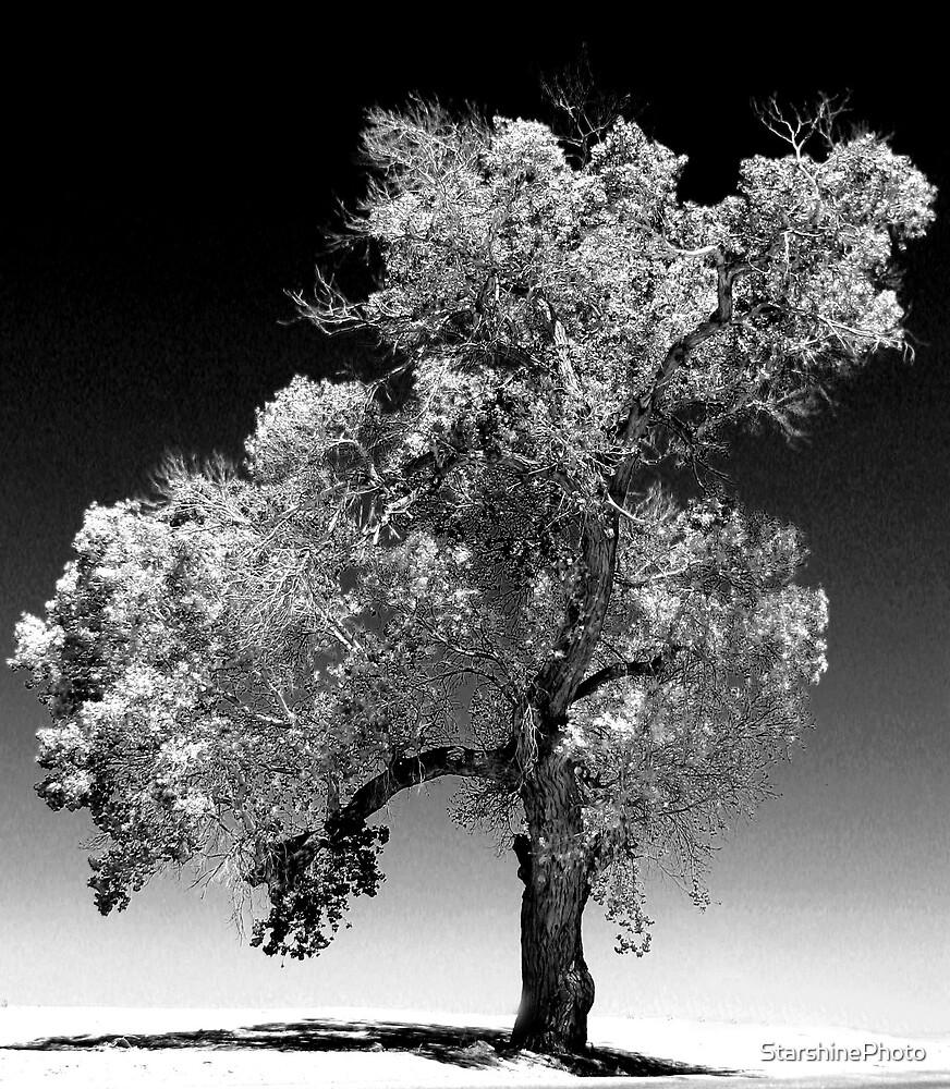 Old CottonWood Tree by StarshinePhoto