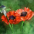 Poppies by Lois  Bryan