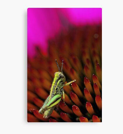 Rugged Landscape -- Grasshopper on Coneflower Canvas Print