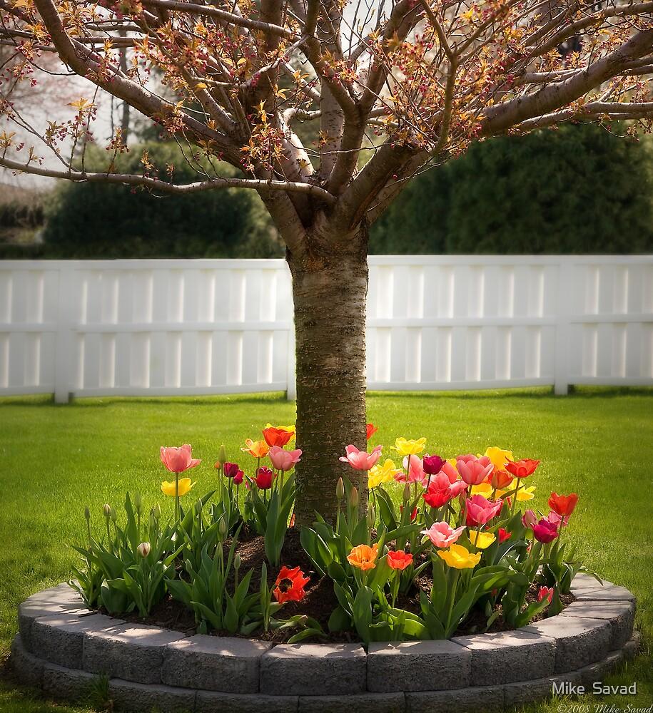 Spring as Sprung  by Michael Savad