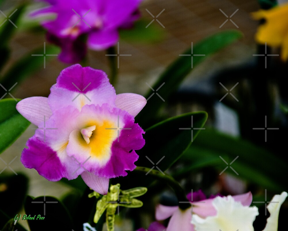 Bright Sunday by photorolandi