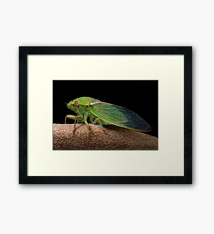 Greengrocer 2 Framed Print