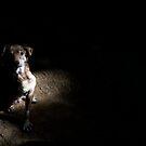 Alone in the Dark by Nando MacHado