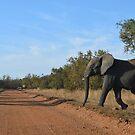 Elephant in the Wild by WanderingBajans