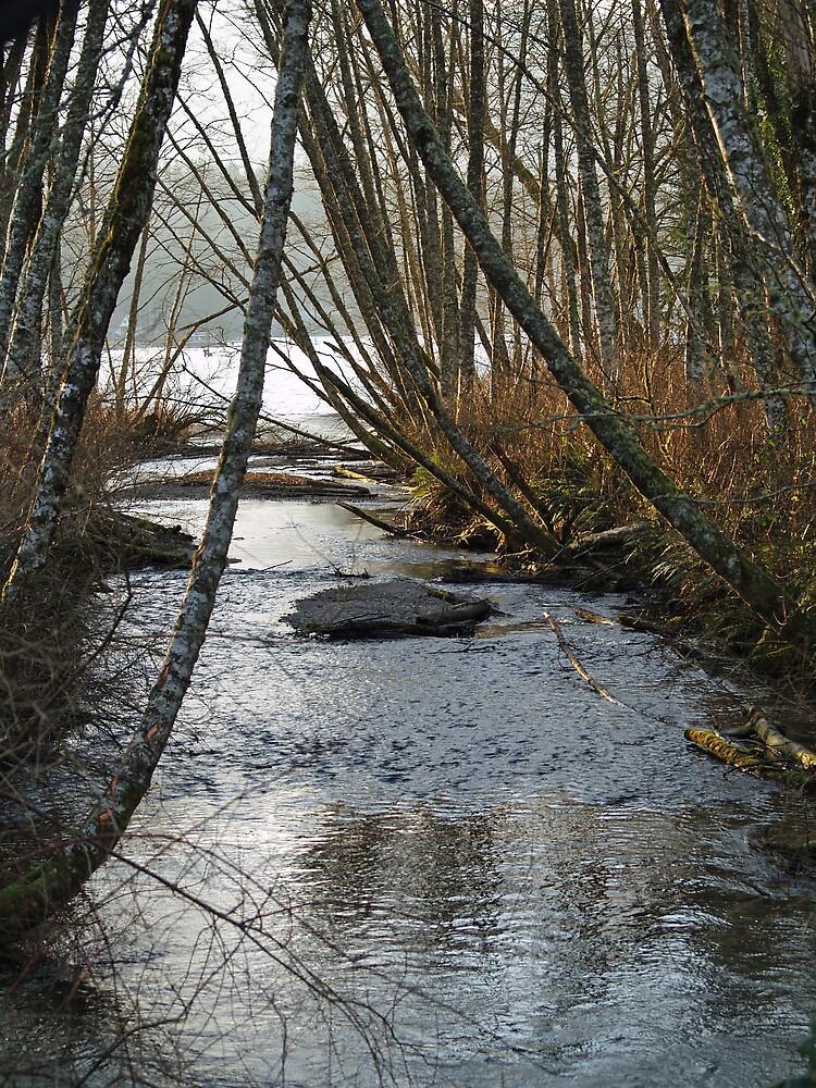 Backwoods Creek by Jack McCallum