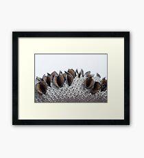 banksia cone Framed Print