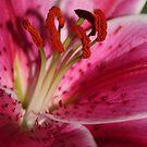 Early Bloom by Daniel Knights