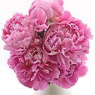 Pink Paeonies by Ann Garrett