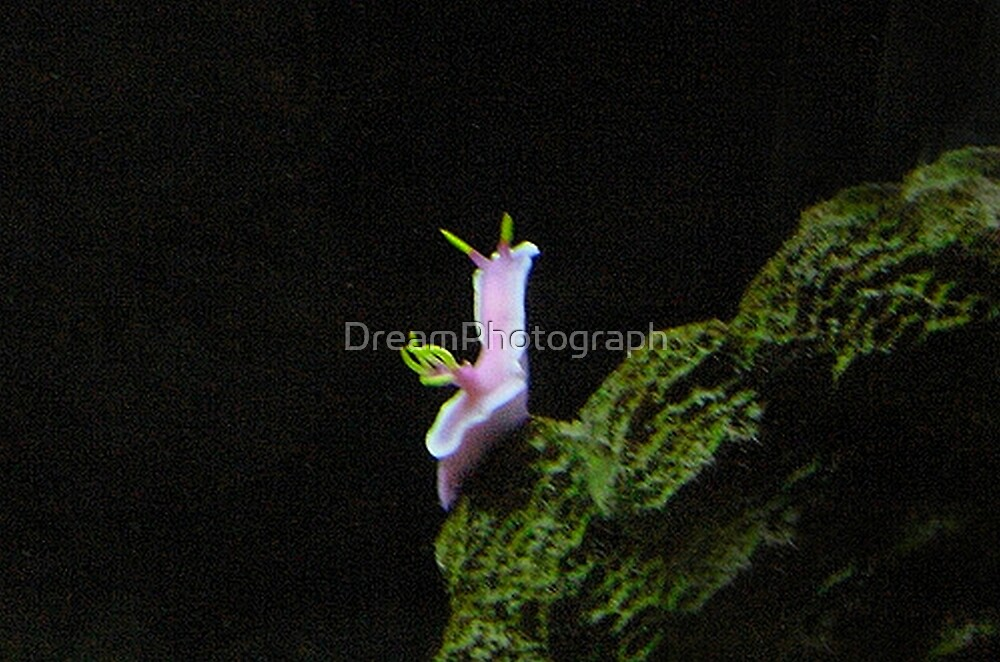 Nudibranch in Bora Bora by DreamPhotograph