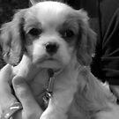 Puppy Love by Niamh Harmon