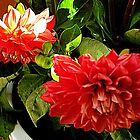 PASSION GLORY - RED DAHLIAS - a Dream of Summer by RubaiDesign