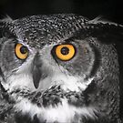 Owl Jewels by Mathew Woodhams