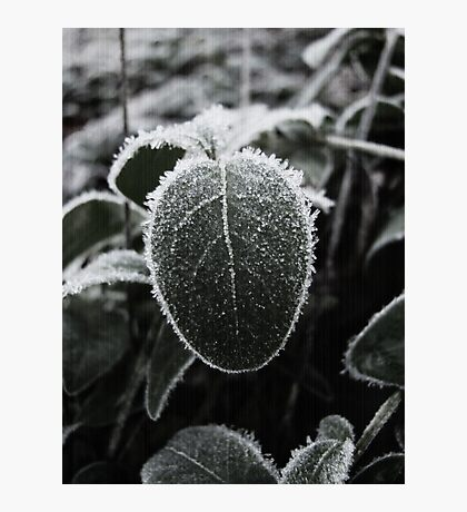 A Small Frosty One Photographic Print