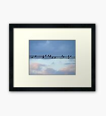 High Wire Birds Framed Print