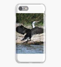 Pied Cormorant  (679) iPhone Case/Skin