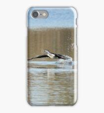 Pied Cormorant  (0015) iPhone Case/Skin