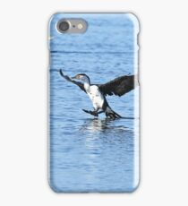 Pied Cormorant  (0247) iPhone Case/Skin