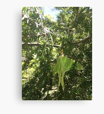Forest Fairy Sighting Canvas Print