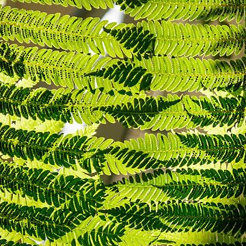 Ferns Overlay II by cooksee