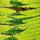 Ferns Overlay (Vertical) by Eric Cook