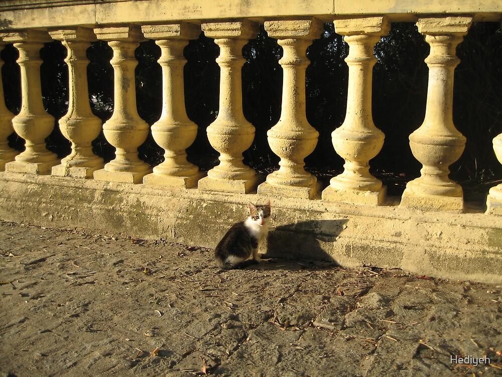 Kitty by Hediyeh