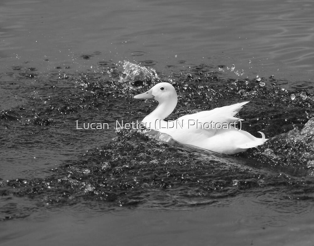 splashing out...... by Lucan  Netley (LDN Photoart)