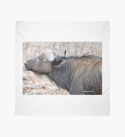 A COMPANION FOR THE LONELY BULL - The Buffalo - Syncerus caffer  Scarf