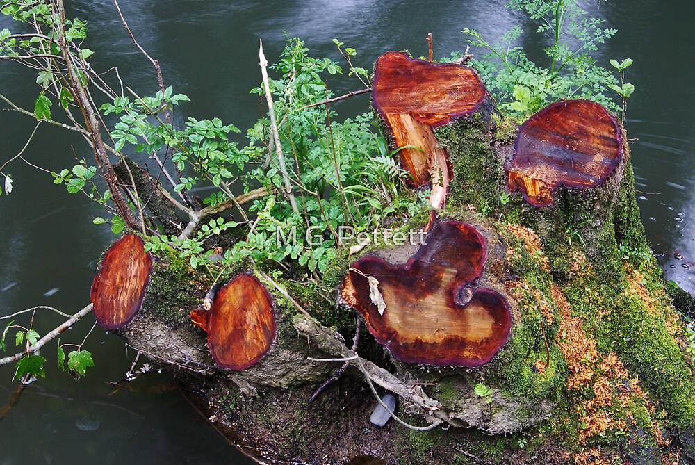 Five stumps by M G  Pettett