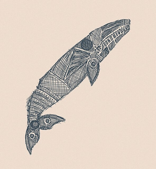 gray whale sketch by Hinterlund