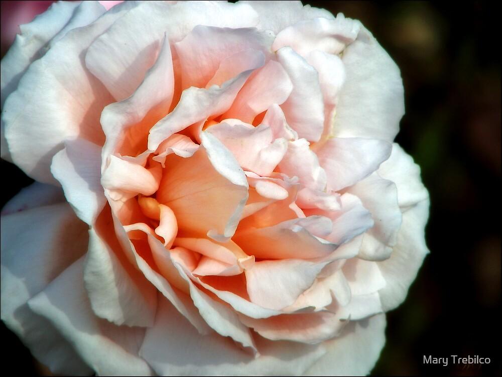 Peaches 'n' cream by Mary Trebilco