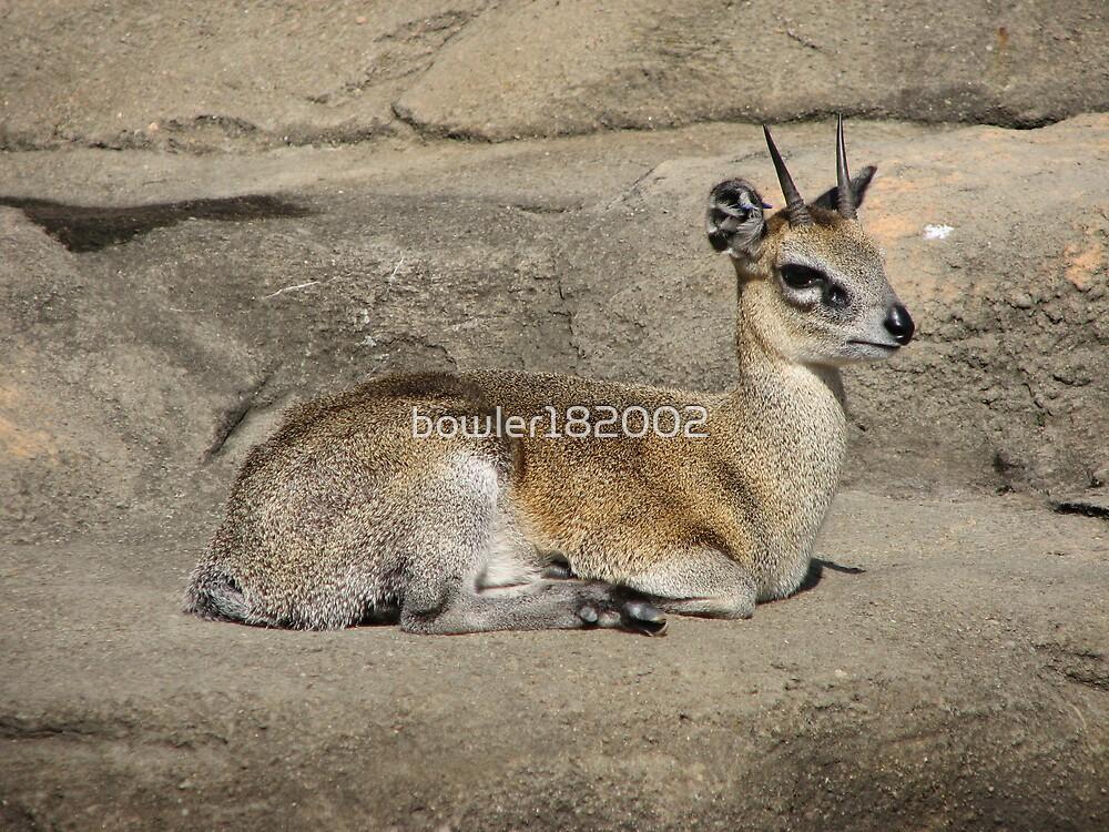Bambi by bowler182002