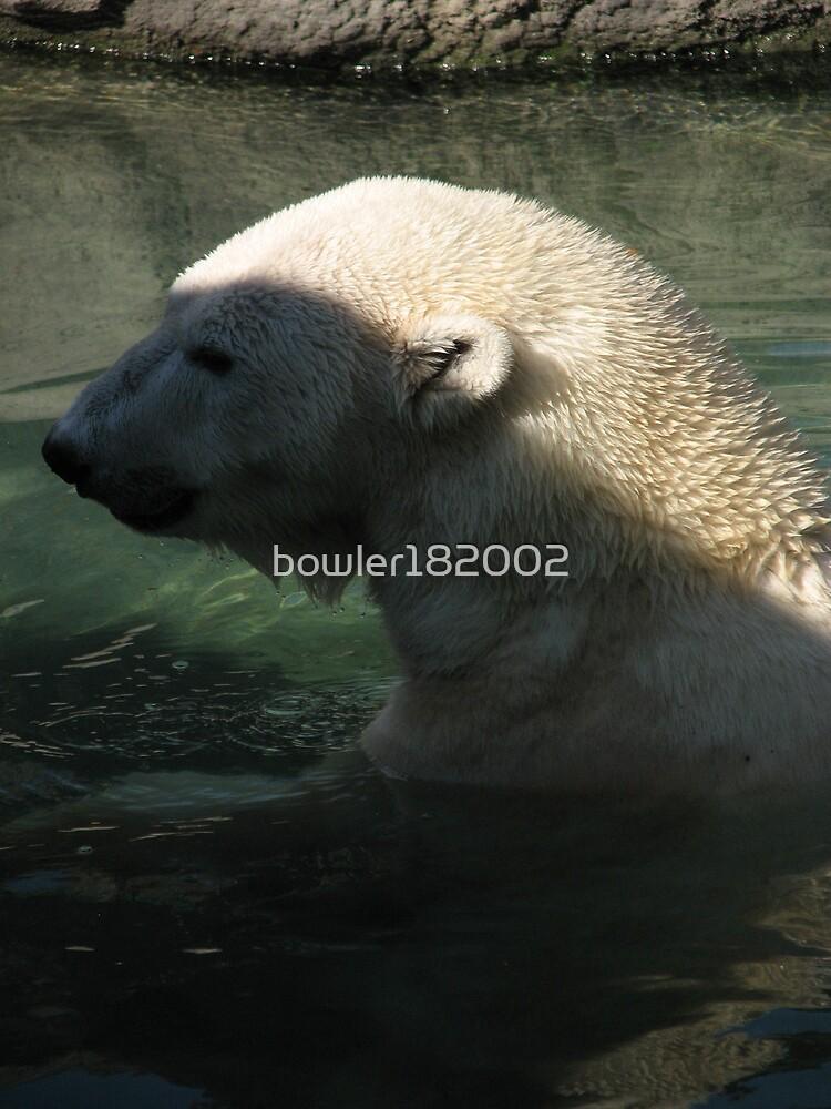 Polar Bear by bowler182002