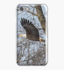 Adult American Bald Eagle  iPhone Case/Skin