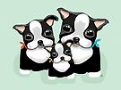 Boston Terriers by Karin Taylor
