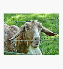 This Old Goat Has A Sense Of Humour  Photographic Print