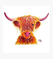 Scottish Highland Cow ' BIG BAD BILL ' by Shirley MacArthur Photographic Print
