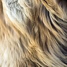 Golden Retriever Fur by illustrateme