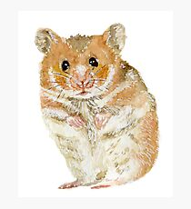 Little Furry Hamster Pet Photographic Print