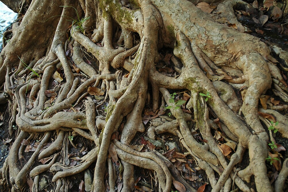 Intricate root pattern by Ian McKenzie