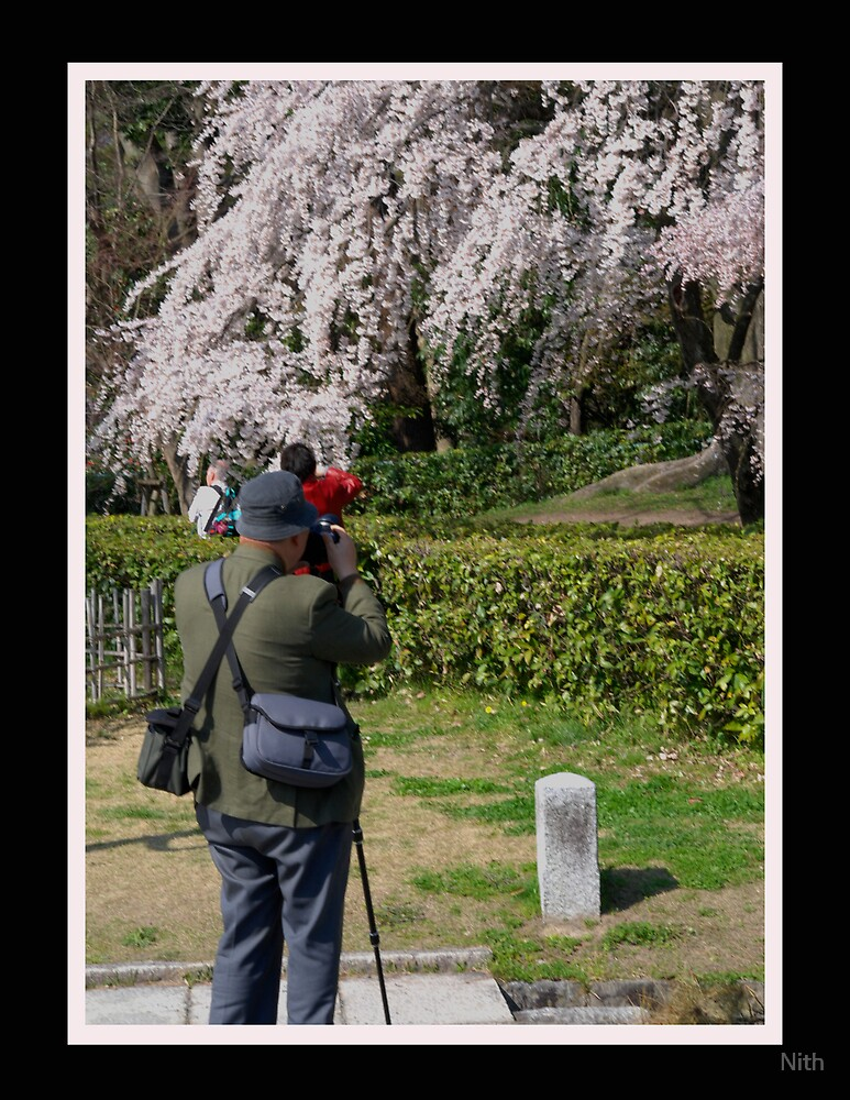 Sakura by Nith