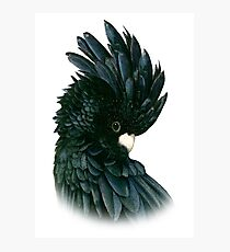 Black Cockatoo 2 Photographic Print